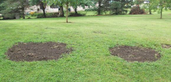 Openings to the Dual Septic Tanks