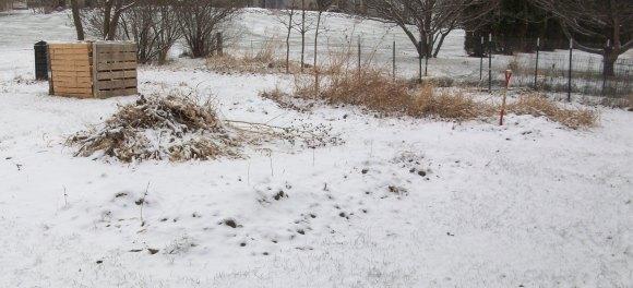 Garden After First Snowfall