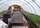 Greenhouse Filling