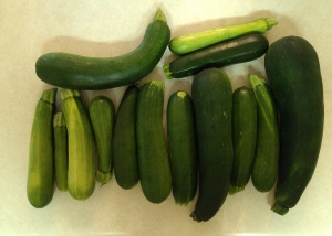 Zucchini from the Ice Box