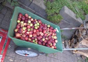 Apples for Livestock