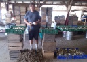 Trimming Onions