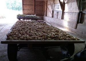 Two Wagon Loads of Onions