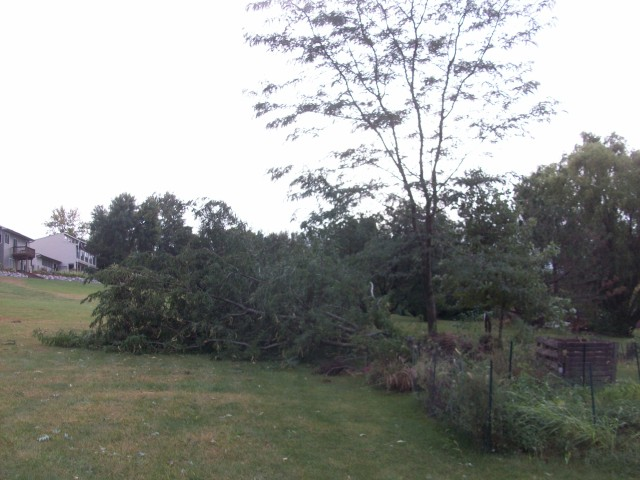 The worst damage was knocking over a locust tree...