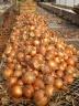 Onion Work