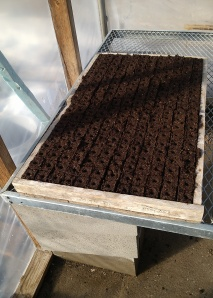 First Soil Blocks at the CSA