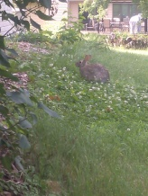 Unsuspecting Predator of the Garden
