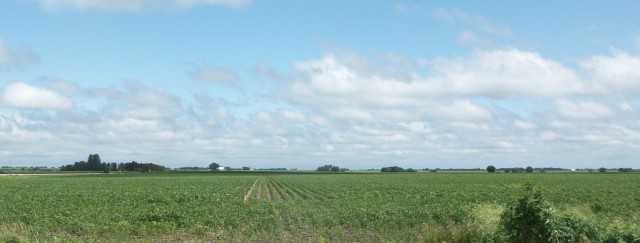 Iowa Soybean Field