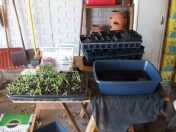 Seedling Watering Station