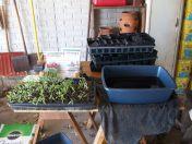 Seedling Watering Station