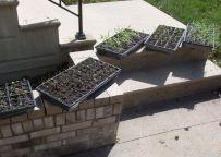 Sunning Seedlings