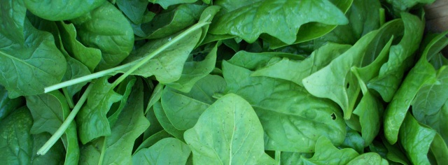 Garden Spinach