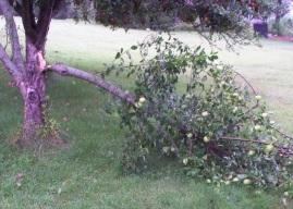 Vroken Branch