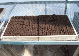 First Seedlings