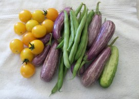 Cherry tomatoes, Fairy Tale eggplant, green beans and a pickling cucumber harvested July 16, 2016