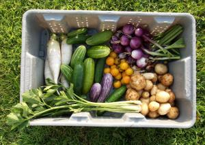 Harvest for the Weekend Kitchen