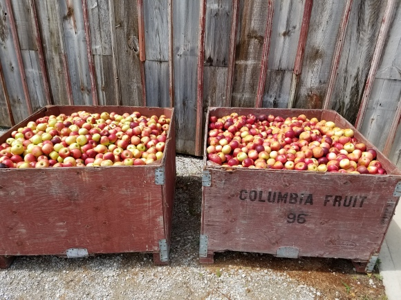 Burgundy Apples