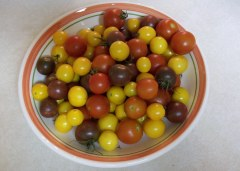 Cherry Tomatoes from Garden Plot Five