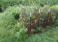 Weedy Garden Plot