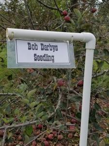 Bob Darby's Seedling