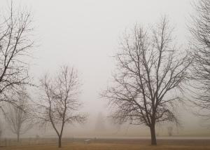 Saturday Fog