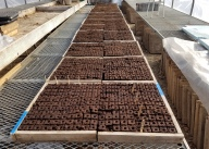 3,120 Soil Blocks